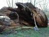 die-baumwelt-skulpturenpfad-waldmenschen-waldhaus-freiburg-thomas-rees264