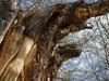 die-baumwelt-skulpturenpfad-waldmenschen-waldhaus-freiburg-thomas-rees309