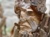 corippo-skulpturen-aus-dem-tal-de-gruenen-wassers-205