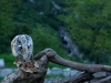 corippo-skulpturen-aus-dem-tal-de-gruenen-wassers-227