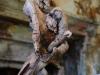 corippo-skulpturen-aus-dem-tal-de-gruenen-wassers-243