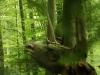 WaldMenschen, 2014, thomas rees 04