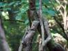 skulpturenpfad-waldmenschen-freiburg-thomas-rees-03
