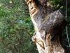 waldmenschen-thomas-rees-422