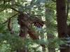 WaldMenschen 2014, der Drache, thomas rees 03