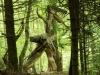 WaldMenschen, 2014, thomas rees 26