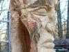 grieswurz-zauberweg-am-hasenhorn-todtnau-thomas-rees275