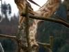 Lebensbaum 022