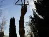 Lebensbaum, thomas rees 152