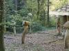 Hexenring , Pilzplatz, thomas rees 02