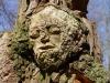 waldmenschen-thomas-rees-438
