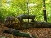 skulpturenpfad-waldmenschen-waldhaus-freiburg-thomas-rees257