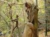 skulpturenpfad-waldmenschen-waldhaus-freiburg-thomas-rees261