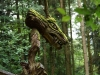 Sternwalddrache 2014, thomas rees 05