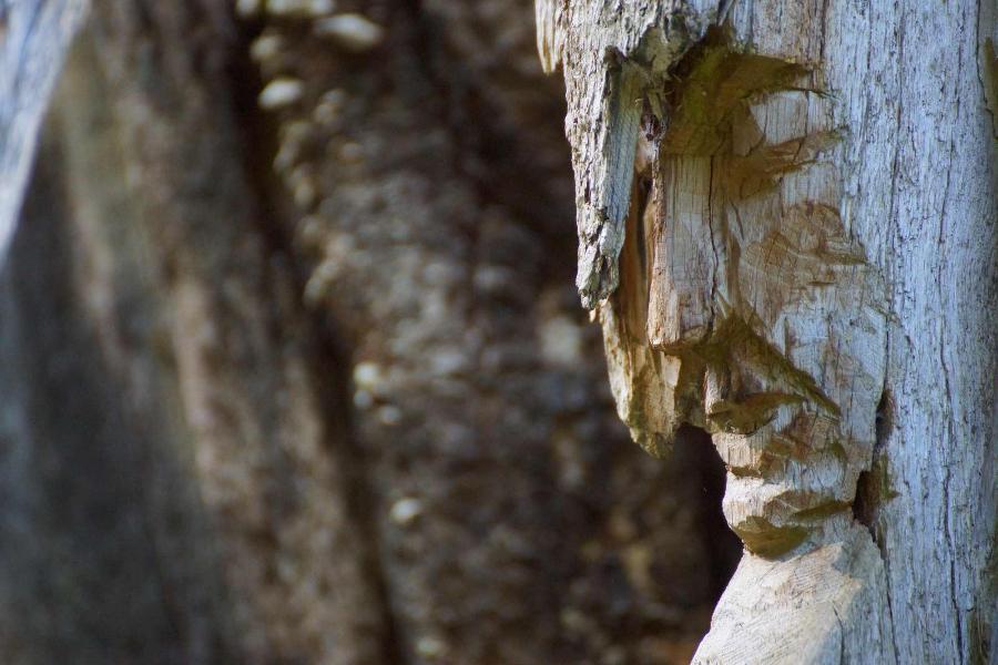 skulpturenpfad-waldmenschen-freiburg-thomas-rees-12