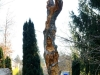 Lebensbaum, thomas rees 153 800