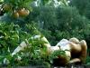 die-regenfrau-im-klostegarten