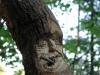 waldmenschen-thomas-rees-550
