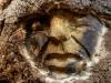 waldmenschen-thomas-rees-626