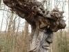 waldmenschen-thomas-rees-446
