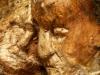 waldmenschen-thomas-rees-449