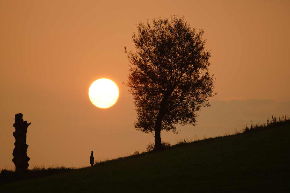Baum der Erkenntnis, September 2012, Sonnenaufgang, thomas rees
