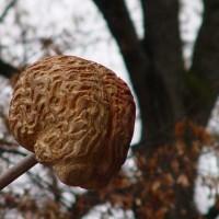 Baum der Weisheit - das Gehirn
