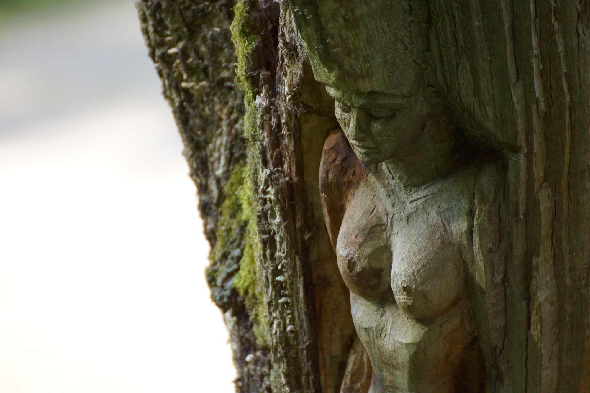 """Skulpturenpfad WaldMenschen, Freiburg, thomas rees, ein Motiv in der """"Baumwelt"""""""