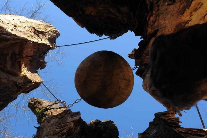 die Baumwelt, Skulpturenpfad WaldMenschen, Waldhaus Freiburg, thomas rees274