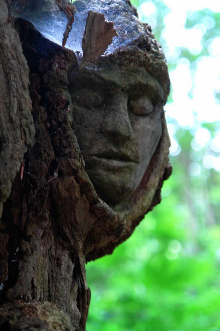 Skulpturenpfad WaldMenschen,Waldgesichter, thomas rees