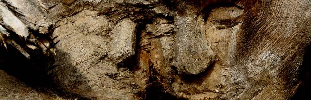 WaldMenschen,der Wurzelkopf, thomas rees