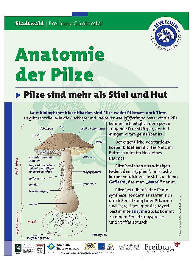 Wunderbar Anatomie Von Pilzen Zeitgenössisch - Anatomie Von ...