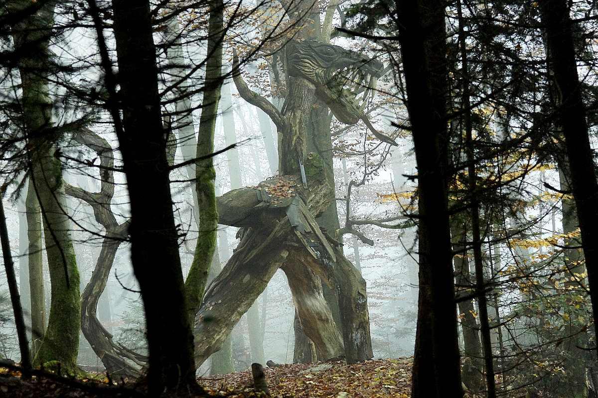 "Mycelium, ""Novembergrau"", thomas rees 12"