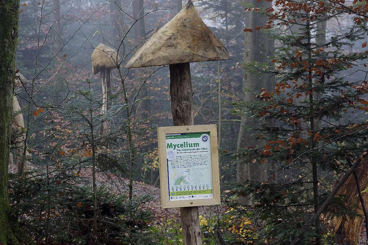 Mycelium, Novembergrau, thomas rees 35