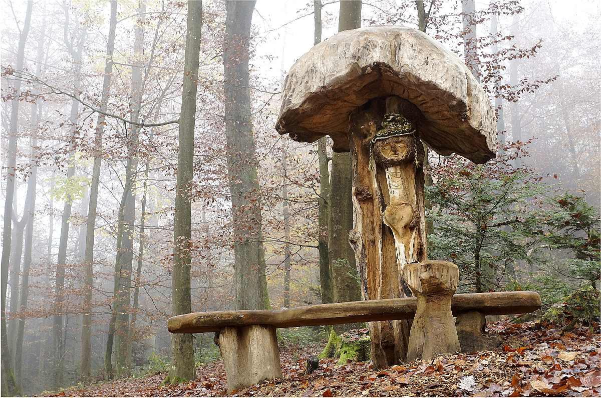 Mycelium, Novembergrau, thomas rees 40
