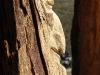 die-baumwelt-skulpturenpfad-waldmenschen-waldhaus-freiburg-thomas-rees279