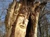 die-baumwelt-skulpturenpfad-waldmenschen-waldhaus-freiburg-thomas-rees310