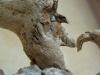 corippo-skulpturen-aus-dem-tal-de-gruenen-wassers-203
