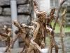 corippo-skulpturen-aus-dem-tal-de-gruenen-wassers-216