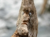 corippo-skulpturen-aus-dem-tal-de-gruenen-wassers-246