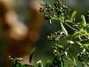 der Bacchus vom Tuniberg, vom Weib, Wein und Wiedehopf,  thomas rees 14