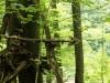WaldMenschen, 2014, thomas rees 05