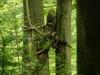 WaldMenschen, 2014, thomas rees 27