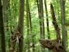 waldmenschen-2013-thomas-rees-636