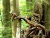 waldmenschen-2013-thomas-rees-637