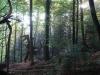 waldmenschen-thomas-rees-412