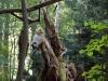 skulpturenpfad-waldmenschen-freiburg-thomas-rees-07
