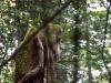 skulpturenpfad-waldmenschen-freiburg-thomas-rees-16