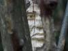 skulpturenpfad-waldmenschen-freiburg-thomas-rees-32-011
