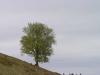 grieswurz-zauberweg-am-hasenhorn-einweihungsfeier-1-mai-2012-todtnau-thomas-rees-701
